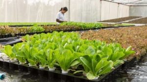 industry-business-horticulture-plant-nursery